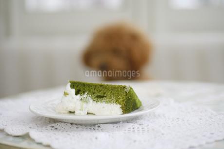 抹茶のシフォンケーキの写真素材 [FYI04280199]