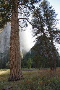 湿原から見上げたカテドラル・ロックと大木の写真素材 [FYI04281319]