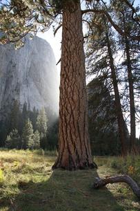 湿原から見上げたカテドラル・ロックと大木の写真素材 [FYI04281340]