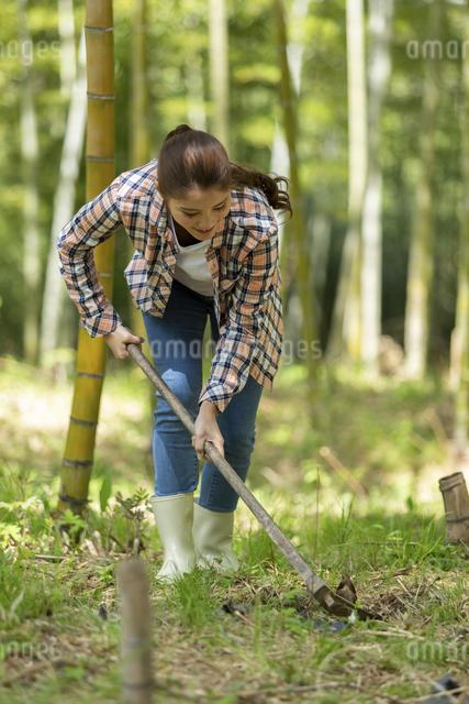 筍を掘る若い女性の写真素材 [FYI04282623]