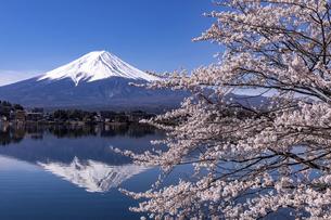 河口湖畔から望む桜と富士山の写真素材 [FYI04283377]