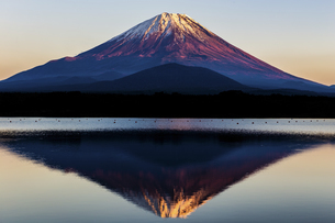 精進湖から望む夕暮れの富士山の写真素材 [FYI04283385]