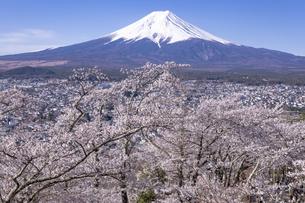 新倉山富士浅間公園から望む桜と富士山の写真素材 [FYI04283406]