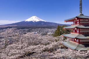 新倉山富士浅間公園から望む桜と五重塔と富士山の写真素材 [FYI04283407]