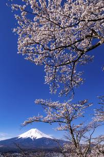 新倉山富士浅間公園から望む桜と富士山の写真素材 [FYI04283408]
