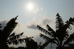 逆光でシルエットになるヤシの葉の写真素材 [FYI04283431]