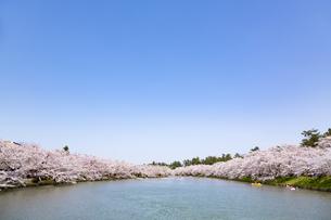 弘前公園 西濠の桜と青空の写真素材 [FYI04283471]