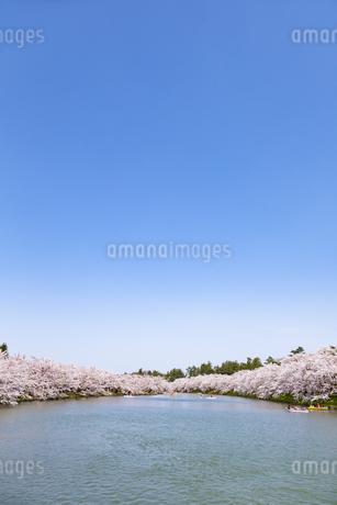 弘前公園 西濠の桜と青空の写真素材 [FYI04283472]