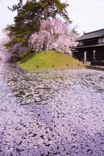 弘前公園  花筏(はないかだ)の写真素材 [FYI04283487]