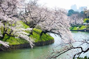 桜の季節の写真素材 [FYI04283541]