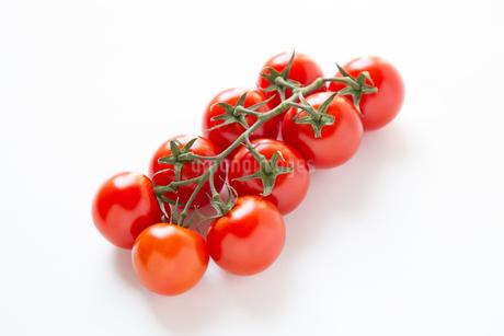 トマトの写真素材 [FYI04283551]