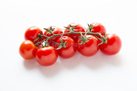 トマトの写真素材 [FYI04283552]