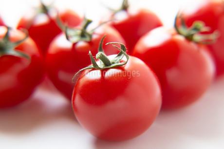 トマトの写真素材 [FYI04283553]
