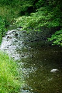 新緑と渓流の写真素材 [FYI04283589]