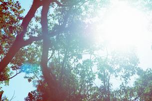樹々に指し込む光の写真素材 [FYI04283593]