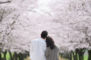 桜並木で寄り添う日本人カップルの写真素材 [FYI04283608]