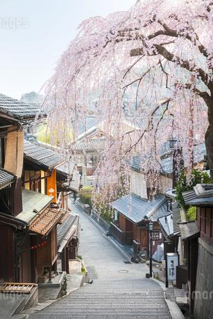 産寧坂と満開の枝垂桜の写真素材 [FYI04283633]
