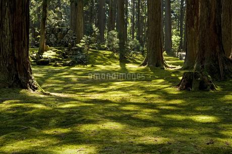 木漏れ日の写真素材 [FYI04283666]
