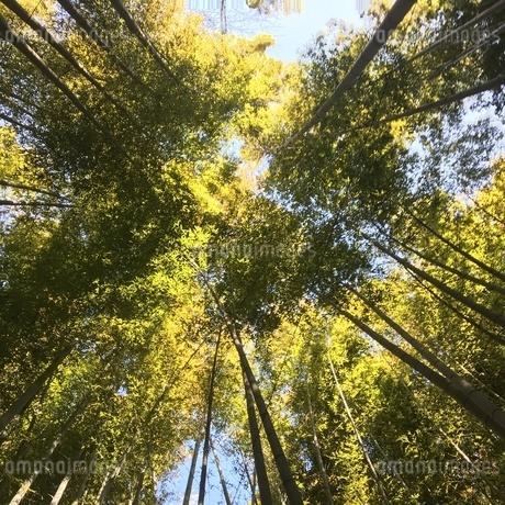 竹林の写真素材 [FYI04283815]