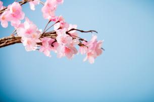 アーティフィシャルフラワーの桜 青背景の写真素材 [FYI04283831]