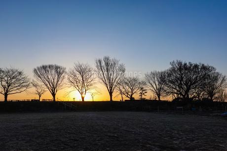 原っぱの木立、様々な樹形の写真素材 [FYI04283848]