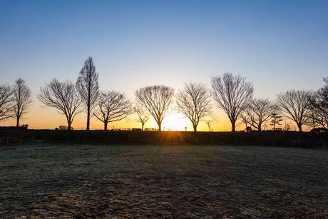 原っぱの日の出、原っぱの木立の写真素材 [FYI04283849]