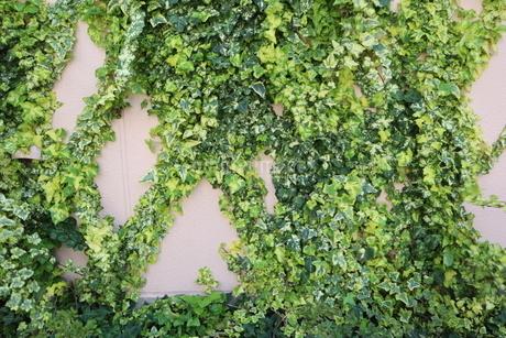壁の葉の写真素材 [FYI04283916]