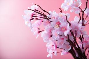アーティフィシャルフラワーの桜 ピンク背景の写真素材 [FYI04284013]