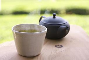 茶畑でお茶の写真素材 [FYI04284014]