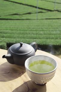 茶畑でお茶の写真素材 [FYI04284015]