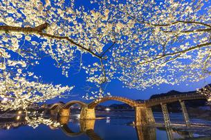 愛でる宵の春の写真素材 [FYI04284219]