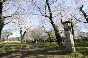桜の咲く飛鳥山公園の写真素材 [FYI04284457]
