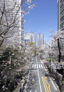 赤坂アークヒルズのサクラ並木の写真素材 [FYI04284461]