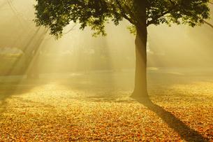 秋の熊本テクノリサーチパークの写真素材 [FYI04284498]
