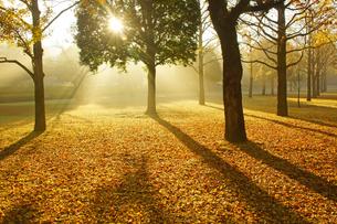 秋の熊本テクノリサーチパークの写真素材 [FYI04284499]