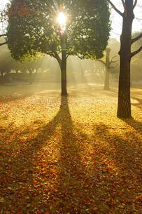 秋の熊本テクノリサーチパークの写真素材 [FYI04284500]