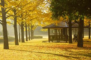 秋の熊本テクノリサーチパークの写真素材 [FYI04284501]