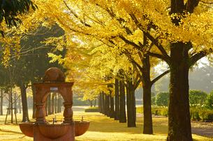 秋の熊本テクノリサーチパークの写真素材 [FYI04284504]