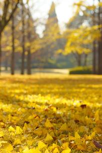 秋の熊本テクノリサーチパークの写真素材 [FYI04284505]