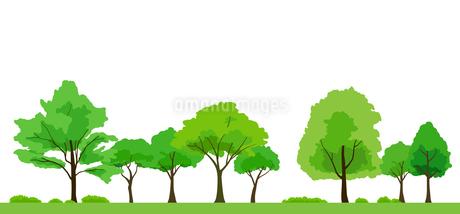 緑木の背景素材のイラスト素材 [FYI04284509]