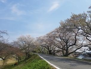 桜の写真素材 [FYI04284571]