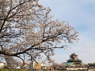 桜の写真素材 [FYI04284574]