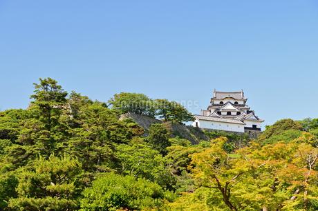 国宝彦根城の写真素材 [FYI04284610]