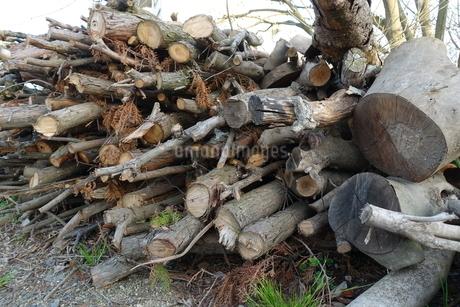 薪の写真素材 [FYI04284770]