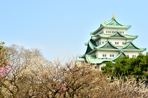 早春の名古屋城の写真素材 [FYI04284790]