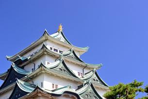 青空の名古屋城天守閣の写真素材 [FYI04284792]