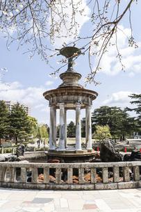 噴水塔を見る鶴舞公園風景の写真素材 [FYI04285379]