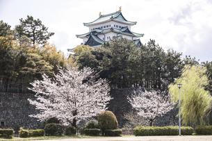 満開のサクラを見る名古屋城天守の写真素材 [FYI04285415]