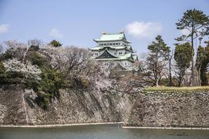 石垣と天守を見る春の名古屋城風景の写真素材 [FYI04285416]