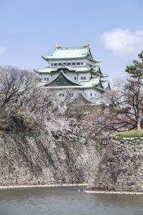 石垣と天守を見る春の名古屋城風景の写真素材 [FYI04285417]